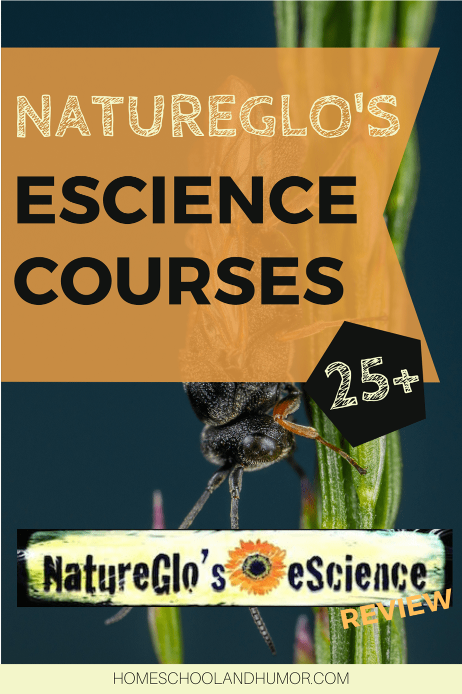 25 Information-Rich Science Courses for Homeschool